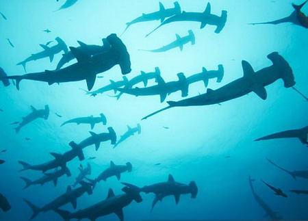 纸叠双髻鲨的步骤