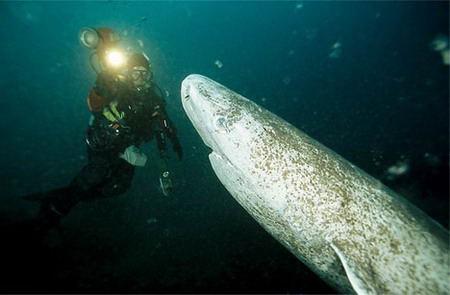 最奇怪的深海动物