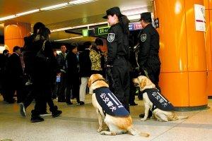 遇到无法上安检仪检查的情况时,由公交警犬协助检查
