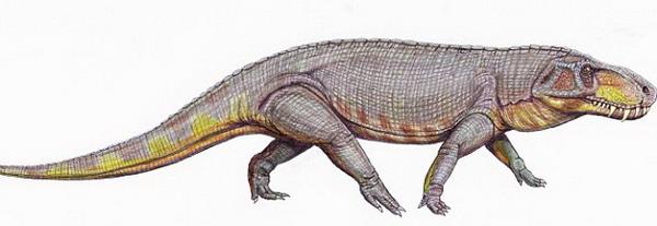 恐龙出现之前食肉动物的最完整化石在巴西被发现 (3)
