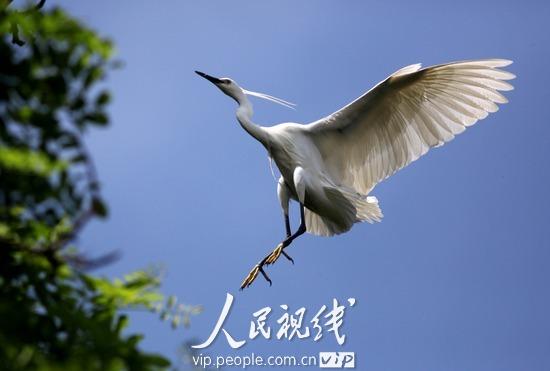 【编荐】美丽的鸟类(下)(转载) - 闲娃 - 我的博客