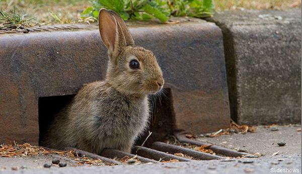 摄影师抓拍到聪慧小动物怎样过马路