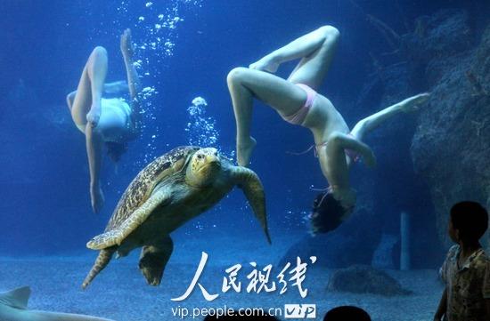 壁纸 动物 海底 海底世界 海洋馆 水族馆 鱼 鱼类 550_361