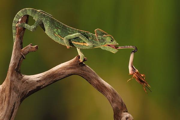 高速照相机捕捉到动物精彩瞬间
