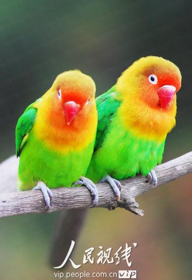 8月1日,一对鸟儿依偎在一起 郑重声明 凡带有 人民视线 字