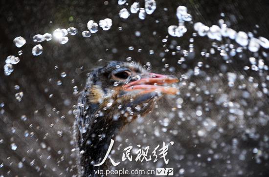 在安徽省亳州曹操公园里的动物园内