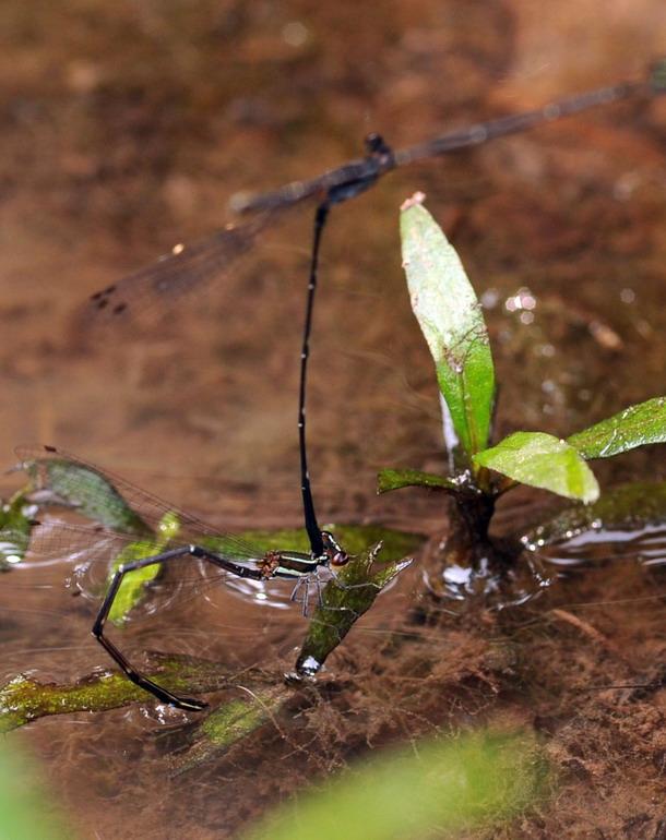 高清:神奇的鹦哥岭自然保护区