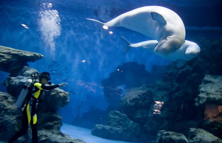 壁纸 海底 海底世界 海洋馆 水族馆 770_496