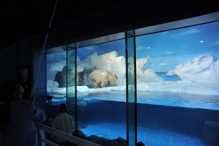 高清:天津海昌极地海洋世界先睹为快