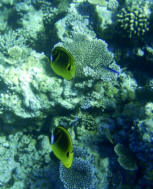 高清:马尔代夫美丽的海底珊瑚 (2)