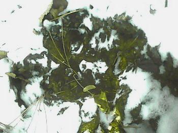 老虎树叶粘贴画图片大全图片
