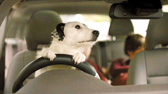 欧美小孩开车头像