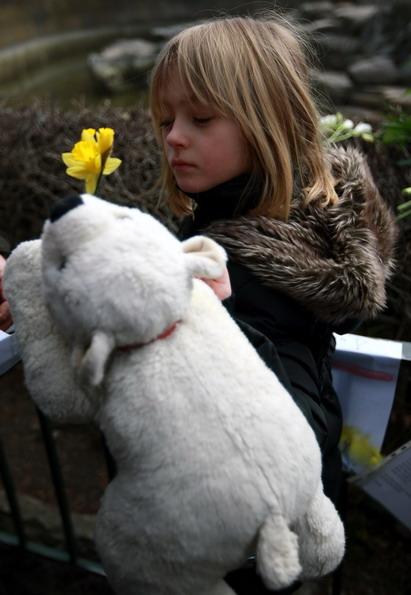 """德国柏林动物园的明星北极熊""""克努特""""当地时间19日"""